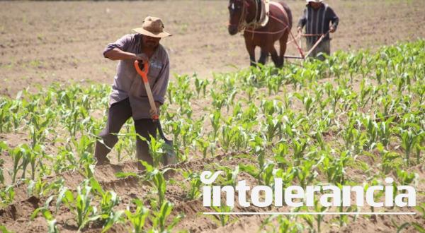 Abren convocatoria a campesinos poblanos para trabajar en EUA